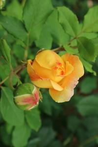 写真「名前も知らぬ黄色い美人」 - 物書きkumaさんの創作日和