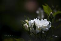 White - 我夢工房