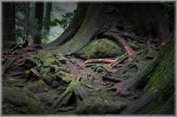 樹の根っこ - 写真画廊 ナカイノブカズ 2