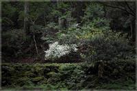 白い花 - 写真画廊 ナカイノブカズ 2
