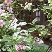 花フェスタ記念公園 ⑵ - 「にゃん」の針しごと