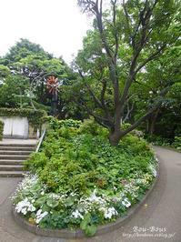 横浜・港の見える丘公園 - ぶうぶうず&まよまよの癒しの日記