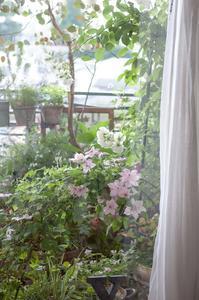 5月の小さな庭便り - le jardinet