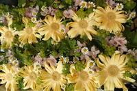 PTAの総会用 卓上花 - 北赤羽花屋ソレイユの日々の花
