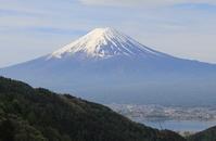 三ツ峠山「おはよう!カモシカさん」 - ヤッホー!今日はどちらへ?