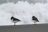 早朝の海岸で・・・・・・・ - カシャカシャblog