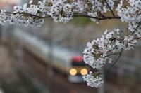 お花見 - ねこの撮った汽車