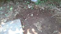 レンゲソウ - うちの庭の備忘録 green's garden