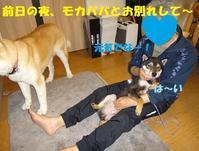咲助くん、お婿入りのご報告♪♪ - もももの部屋(家族を待っている保護犬たちと我家の愛犬のブログです)