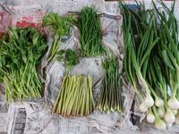 実家から届いた新鮮野菜たち 2017 - お弁当と春の空