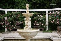 rose garden 4 - aco* mode