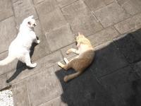 モリッシー、吼える! - シェークスピアの猫