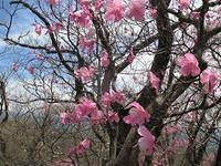 桐生市 赤城山 花盛りの利平茶屋周辺尾根から三段ノ滝     Mount Akagi in Kiryū, Gunma  - やっぱり自然が好き