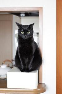 無印のスポンジからダスキンのスポンジに。 - きょうだい猫と仲良し暮らし
