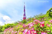東京タワーと薔薇の花 - 風景写真家 鐘ヶ江道彦のフォトブログ