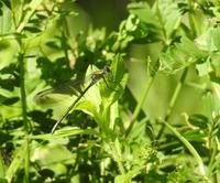 小さな昆虫たち - 花と写真と