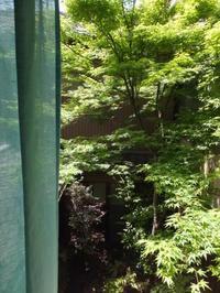 小さい庭でも - コトリ設計事務所   コトリの日々@寺町通り広小路下る京都御所東