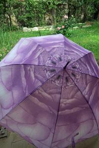傘させば花開く傘と庭のバラ - ペルージャ発 なおこの絵日記 - Fotoblog da Perugia