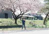 河原の桜-4- - ayumilife with kate