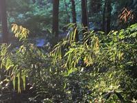 5月の夕暮れ…谷戸山公園 - 散歩ガイド