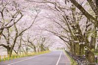 SAKURA LOVE 47 - がんばるhirotan