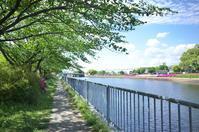 運河沿いの散歩道 - LOOSE