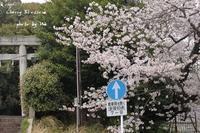 圧倒的桜。2017 - 奇跡の星 ―― 大地に根付く生き方を