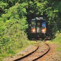 新緑のトンネル - ゆる鉄旅情