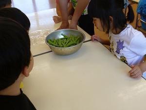 スナップえんどうおいしかったよ♪ - まつばっこ広場・新潟市江南区松葉保育園