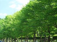 #688 樹木公園 - 想い出cameraパートⅢ