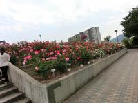 バラ公園 - はりねずみの日記帳