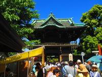 柴又から市川 - 東京いけばな日記 花と暮らしと生活と