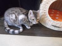 猫なんて! 作家と猫をめぐる47話 - ネコと文学と猫ブンガク