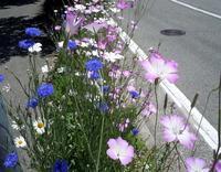 路傍の花、樹々の鳥(163) ~ 五月を歩く ~ - 大屋地爵士のJAZZYな生活