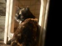 ハンターさつき - 愛犬家の猫日記