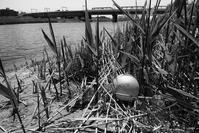 みなほちゃんのボール - Photo & Shot