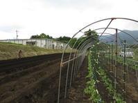 夏野菜の定植 トマト、ナス、ズッキーニ - 南阿蘇 手づくり農園 菜の風