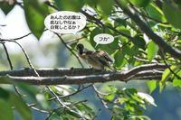 明石公園 2017.05.19 おばちゃんパワーで大集合 - At Studio TA