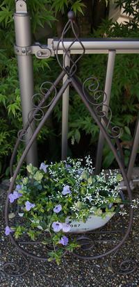 ブリキ缶の寄せ植えと、しずく型の鉢台/ビオラ(デルフト・ブルー)/Strawberry Hill (イングリッシュローズ)/春はあけぼの(絵本) - DOUBLE RAINBOW