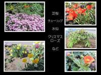 庭の花が咲いてきました。 - 楽しい わたしの食卓