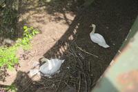 白鳥の巣-1 - 料理下手妻と食いしん坊旦那のフランス留学