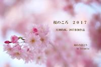 桜のころ - 流れのほとり