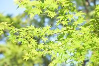 新緑の頃の鎌倉*浄智寺 - 想い出
