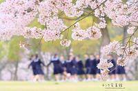 圧倒的桜。2017 - チンク写真館