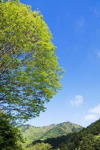 5月19日 新緑の森 - 日々GILIGILI