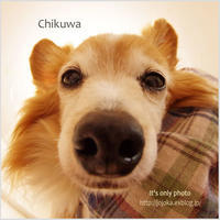 Birthday of the Chikuwa 16 times - It's only photo