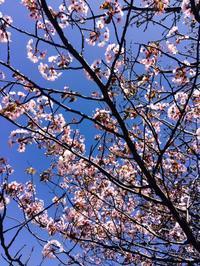 北海道の春。移住して一年経ちました(o^^o) - STELLA TIME  沖縄県名護市(元STELLA TIME CAFE)