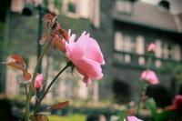 花香写 - なちゅフォト