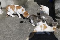 近所のネコ溜り - ちょっとネコばか