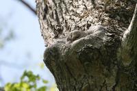 初めての林で・・・・・・・ - カシャカシャblog